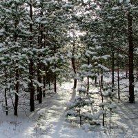 Зимний лес. :: Маргарита ( Марта ) Дрожжина