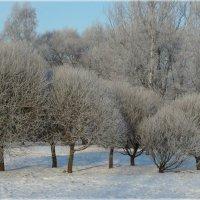 Зима-холода. :: Евгений К