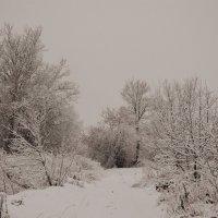 Зима :: Алёна Бадьина