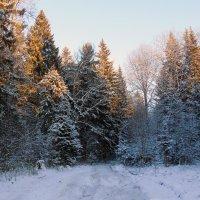 Зимний лес :: Анатолий Антонов