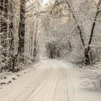 Дорога в зимнем лесу :: Михаил Вандич