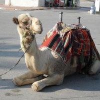П о дороге на Мёртвое море :: Надежда
