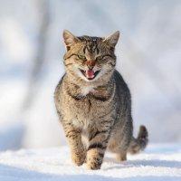 Кот, который гулял сам по себе. :: Светлана Ивановна Медведева