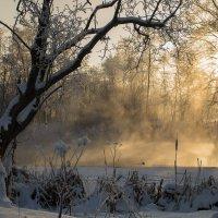 морозный день :: татьяна