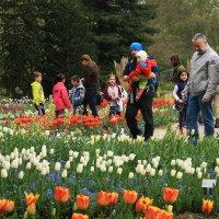 Тюльпаны и зрители :: Alexander Andronik
