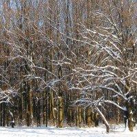 Зимний лес. :: Борис Митрохин