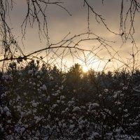 Снежно-ягодный закат :) :: Виктор М