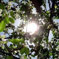 солнце :: Александра Беляева