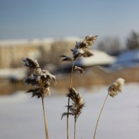 Зима.... :: victor Lion