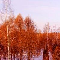 Рыжая зима :: Екатерррина Полунина