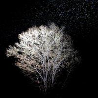 Зимнее дерево. :: Виктория Чурилова