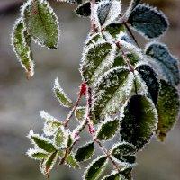 Морозное дыхание. :: Svetlana Baglai
