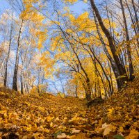 Осень :: Nataliya Barinova