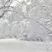 Зимний лес спит :: Инна