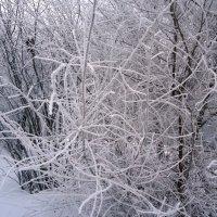 Эх, зима сибирская... :: Лариса Рогова