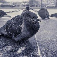 Холодно. :: Алексей Окунеев