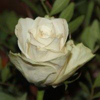 Что за праздник без  цветов? :: Tatiana Markova
