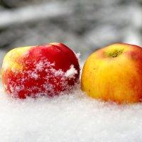 Яблоки на снегу... :: Алексей Ковынев