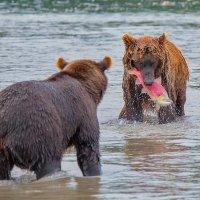 Это мой лосось!!! :: Денис Будьков
