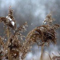 Снег  идет...... :: Валерия  Полещикова