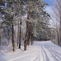 По лыжне :: Наталия Григорьева