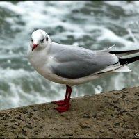 Смелая птица :: Ольга Голубева