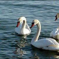 Белые птицы :: Ольга Голубева