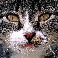 Кошачий взгляд-1 :: Елена Кирьянова