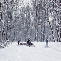 на лыжне :: лиана алексеева