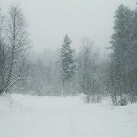 В заснеженном лесу :: Zifa Dimitrieva