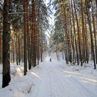 Убегающие в даль . :: Мила Бовкун