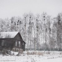 Птичий лес. :: Евгений Андронов