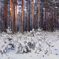 Сумерки.Зимний лес :: Павлова Татьяна Павлова