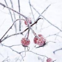 Зимний квадрат :: Инна Шолпо