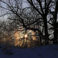 Морозный январь 2016го :: Юрий Клишин
