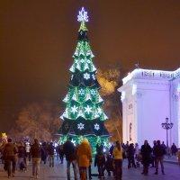 Ёлка на Думской площади. :: Raisa Ivanova
