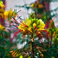 Экзотический цветок :: Александр Картеропуло