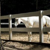 Лошадь :: Мария Шуляковская