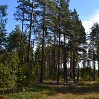 Осенний лес. :: zoja