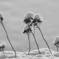 Зимние цветы :: Владимир Зонов