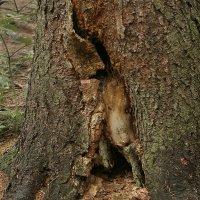 Зверь деревянный :: Валерий Талашов