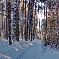 Пахнет снег сосновой тишиною... :: Лесо-Вед (Баранов)