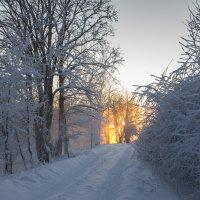 зимняя сказка 03 :: Denis Zakalyapin