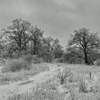 После  ледяного  дождя.  12  января. :: Валера39 Василевский.