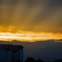 Лучи летнего заката :: Елена Нор