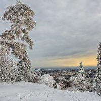 Зимнее дерево :: vladimir Bormotov