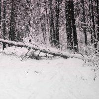 После снегопада . :: Мила Бовкун