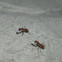 Будущие муравьи :: Юлия Жогина