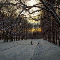 Зимний отдых :: Рома Григорьев
