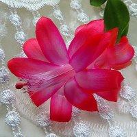 И зимой цветут цветы..... :: Павлова Татьяна Павлова